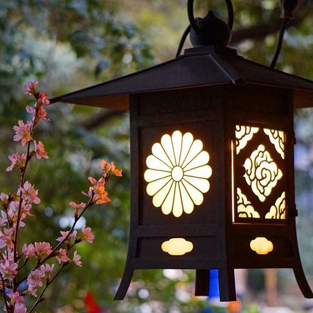 Pure1110 さんのinstagramをピンしています 灯りと 桜 川越 氷川神社さんにて 長い竹筒の花器に生けられた 桜のしつらえが とても素敵でした 灯りをつけましょ ぼんぼりに お花をあげましょ 桃の花 ある記憶が ふと蘇りました 桃の