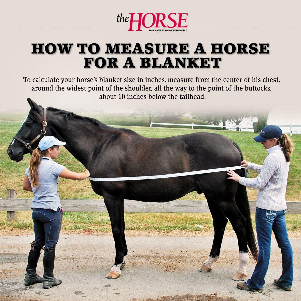 Horse blanketing faqs horses horse care horse training