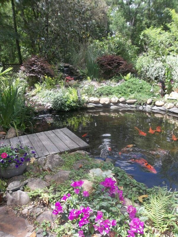 1000 ideas about shubunkin goldfish on pinterest comet for Nice koi fish pond