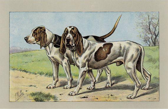 Vintage Beagle Art Print Antique French Lithograph C 1907