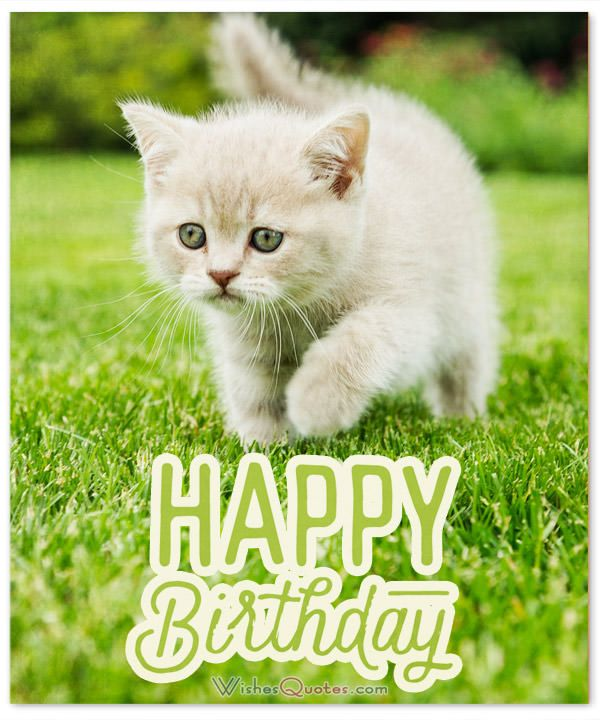 Happy Birthday Cat Wishes: 100+ Amazing Birthday Wishes For