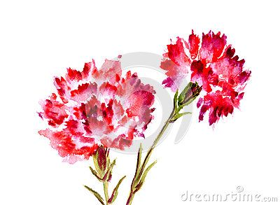 Watercolor Red Flower Carnation Clavel Rojo Claveles Flores