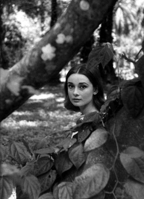 Oh! Audrey