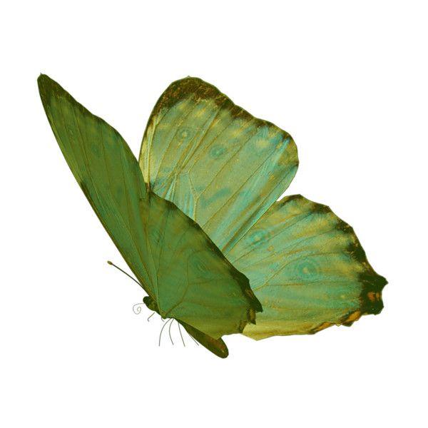 Kosmetika Tiande Rr Raspberrytea Element047 Png Na Yandeks Fotkah Liked On Polyvore Featuring Butterflies Animals Fillers Gre Green Aesthetic Png Green