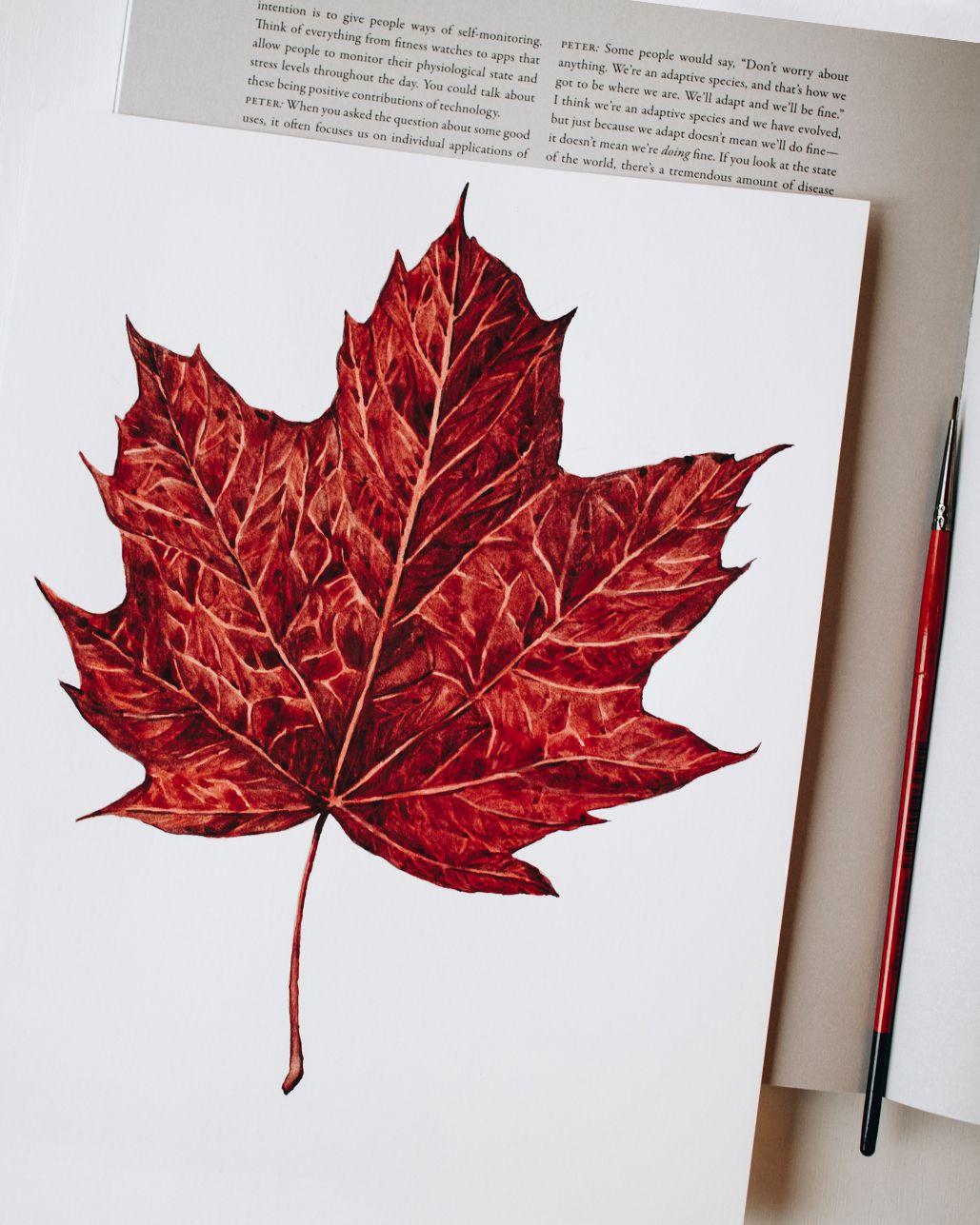 Red Autumn Leaf Botanical Illustration Tutorial Maple Leaf