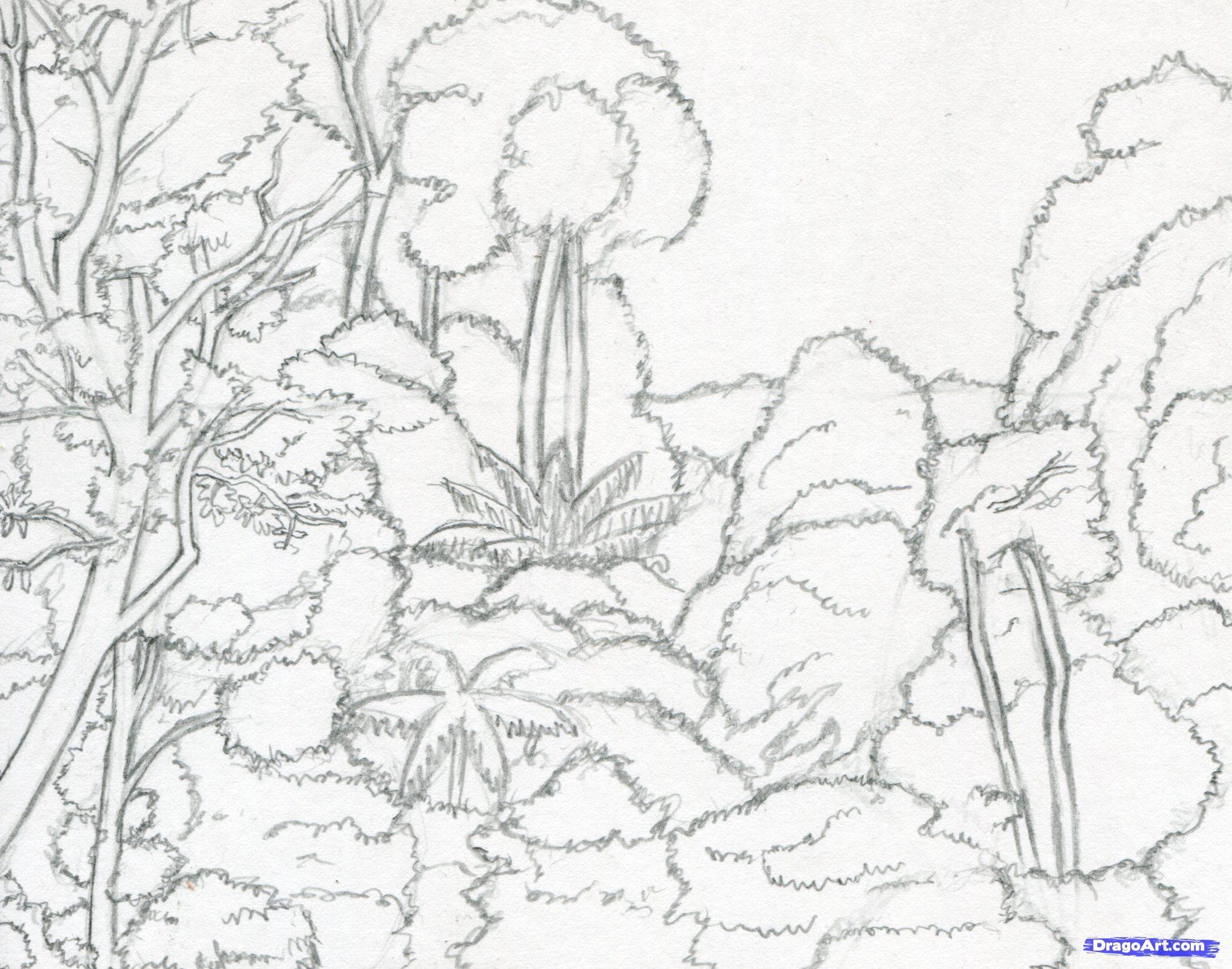 Tropical Rainforest Animals Drawing drawarainforest