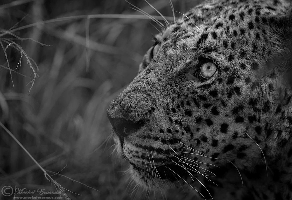 All in the eyes... by Morkel Erasmus on 500px