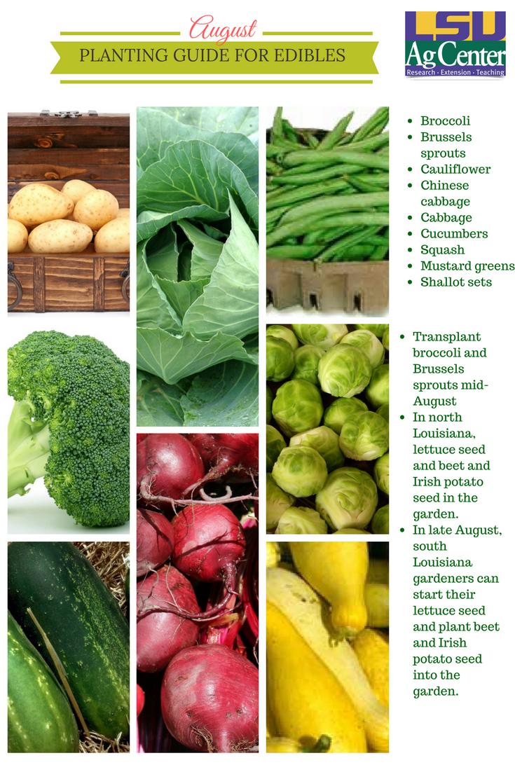 Summer Vegetable Gardening Summer Vegetables Garden Vegetables Chinese Cabbage