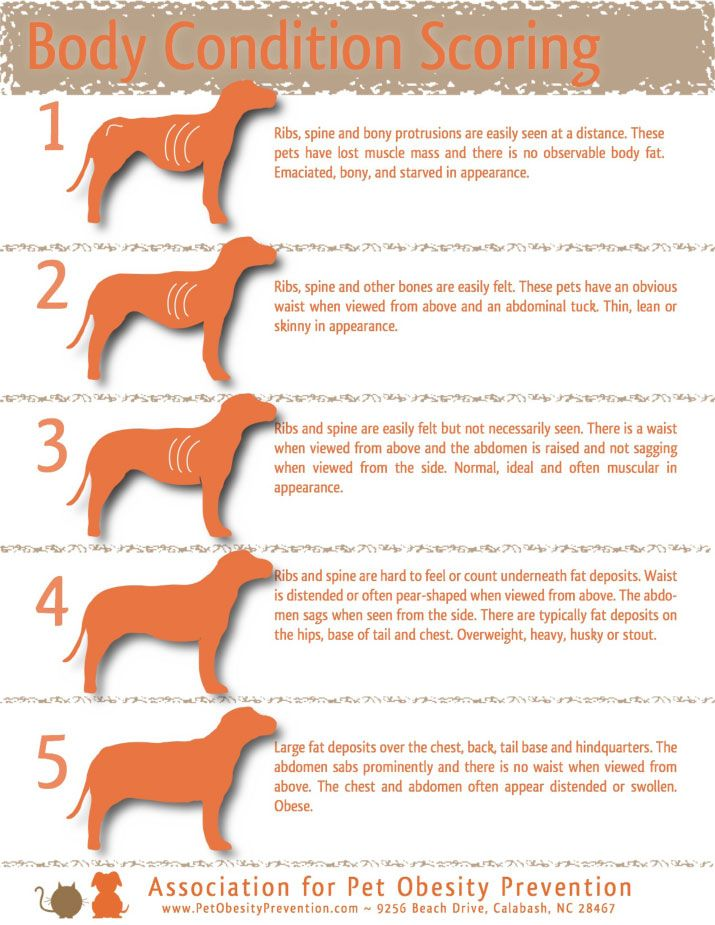 How to tell if your dog is over under weight also pet health rh pinterest