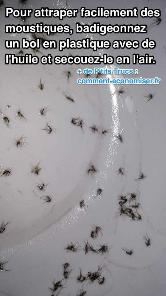 Enfin Une Astuce Pour Attraper Les Moustiques Facilement