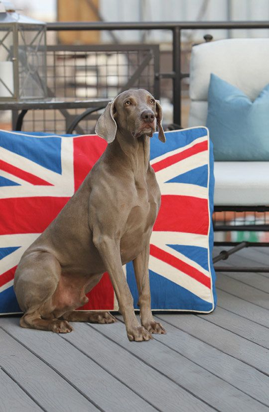 Win This Large Union Jack Pet Bed From Unleashed Life Big Dog