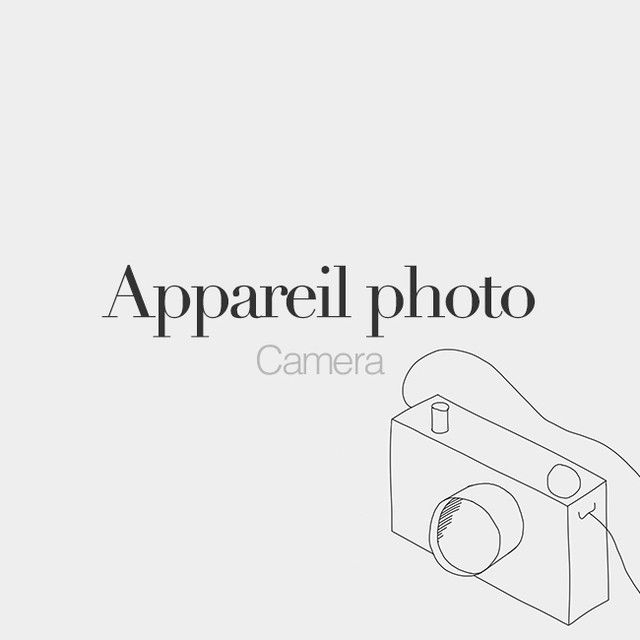 French Words On Instagram Appareil Photo Masculine Word Camera A Pa ʁɛj Fɔ To Dedicated To Parisinfourmon French Words French Phrases Learn French
