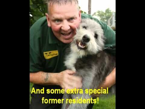 Dogs Trust Glasgow Highlights 2011 Rehoming Dogs Trust Dogs
