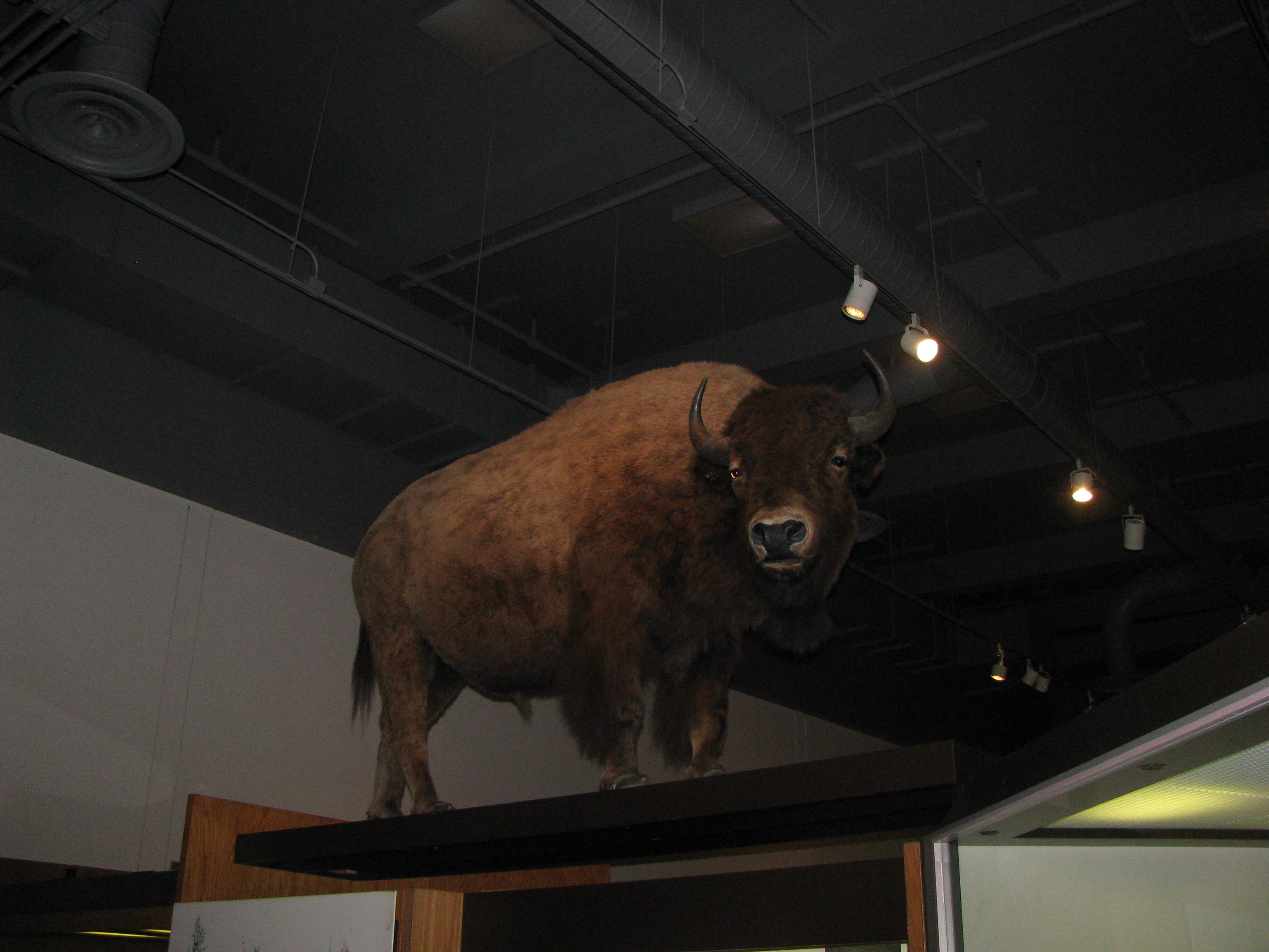 Museum of the North Fairbanks, Alaska (With images