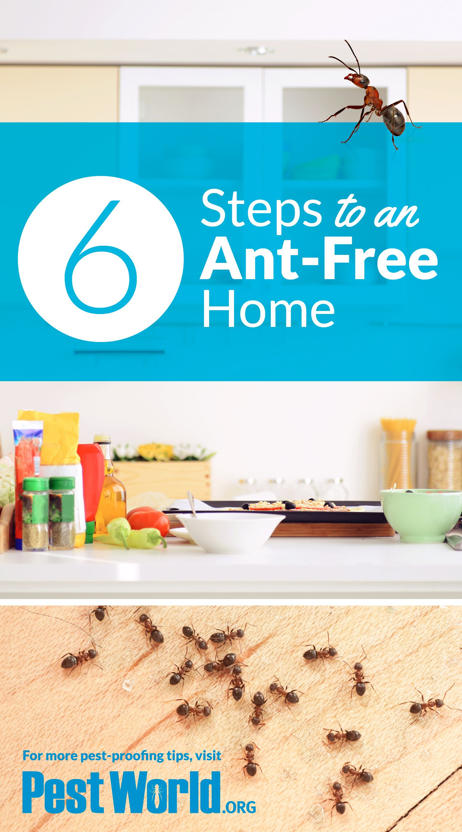 How To Get Rid Of Ants In Your Home Rid Of Ants Get Rid Of Ants Termite Control