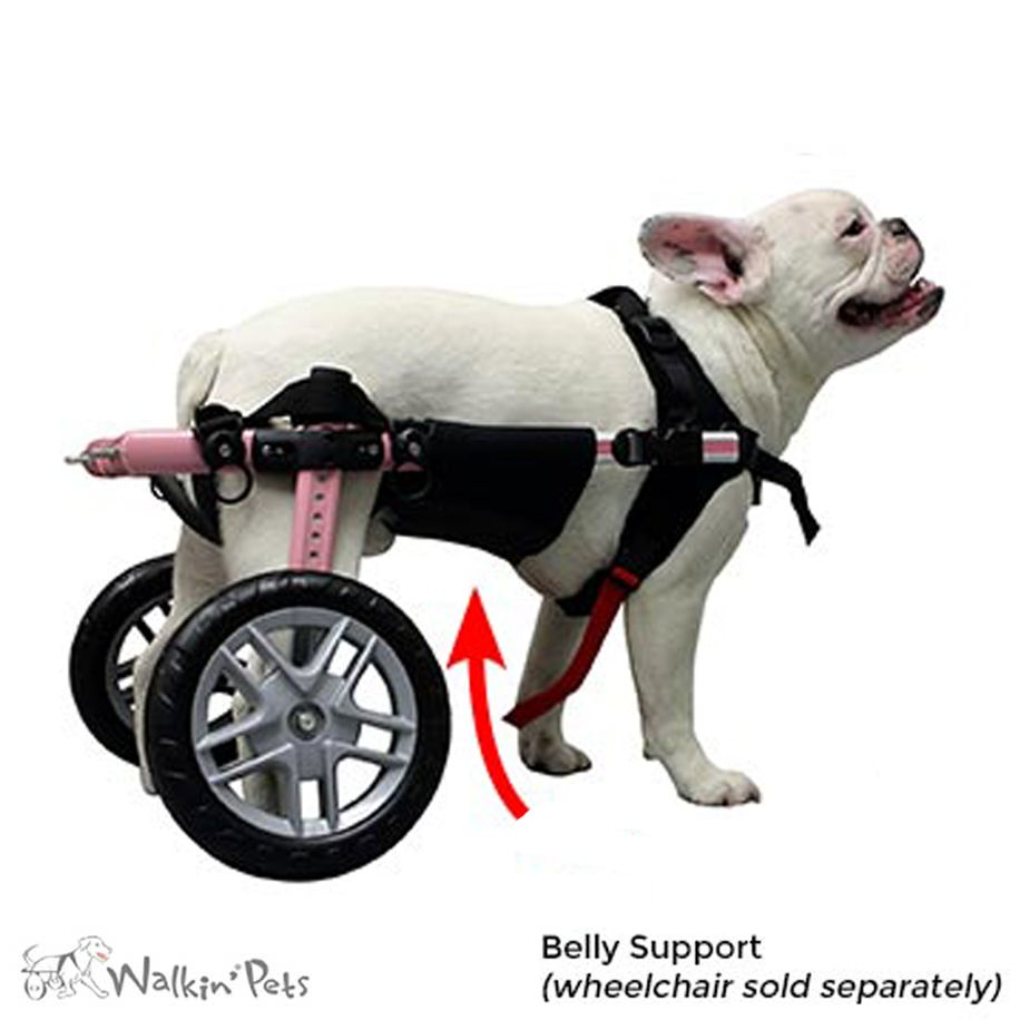 Belly Support For Walkin Wheels Dog Wheelchair With Images Dog Wheelchair Diy Dog Wheelchair Teddy Dog