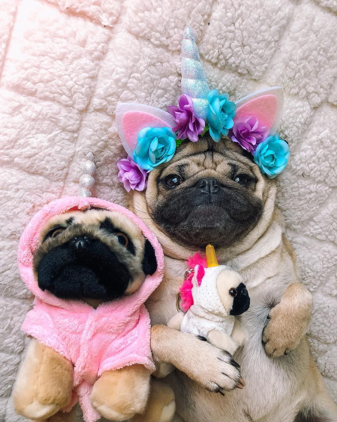 Happy National Unipug Day Doug We Are Magical Creatures Us