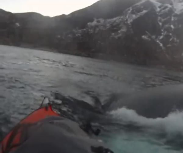 Kayak meets humpback whale and the encounter gets filmed.