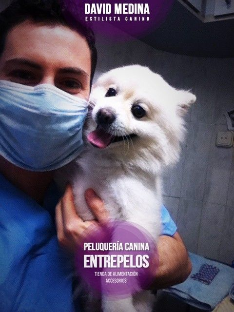 """¿Entrepelos Peluquería Canina o guardería? Mirad que """"niño"""" más guapo. :)"""