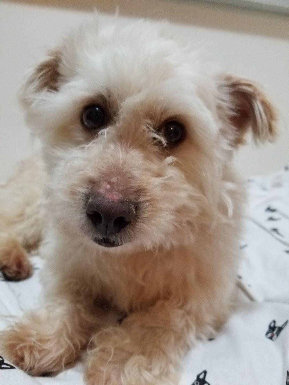 Adopt Afrojack on Adoption, Dogs, Maltese mix