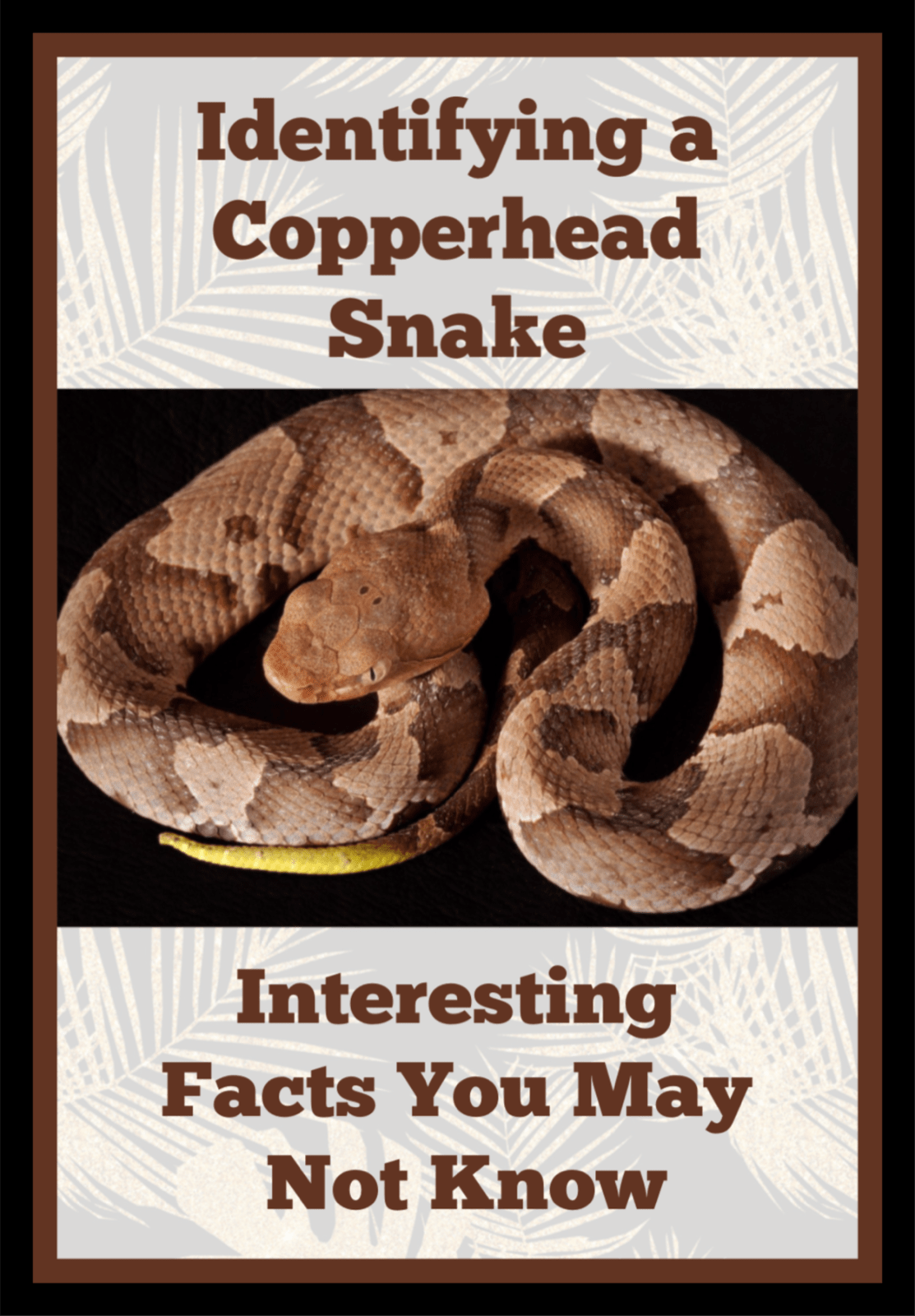 3654d5824ec3e0bc9f2366e2ffdd3dda - How To Get Rid Of Copperhead Snakes In Your Yard