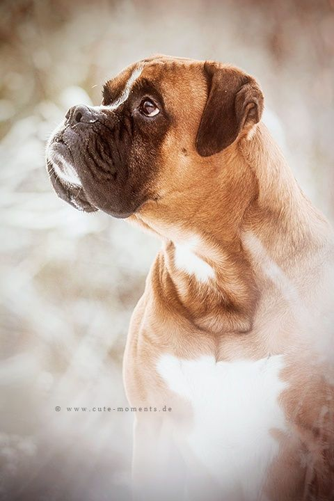 my love by Jessica Lipki on 500px