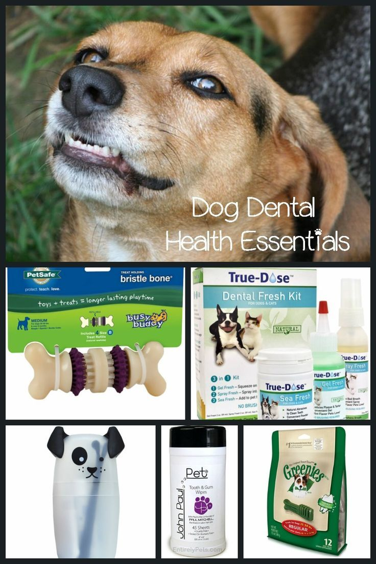 Must Have Products For Your Dog S Dental Health Dog Vills