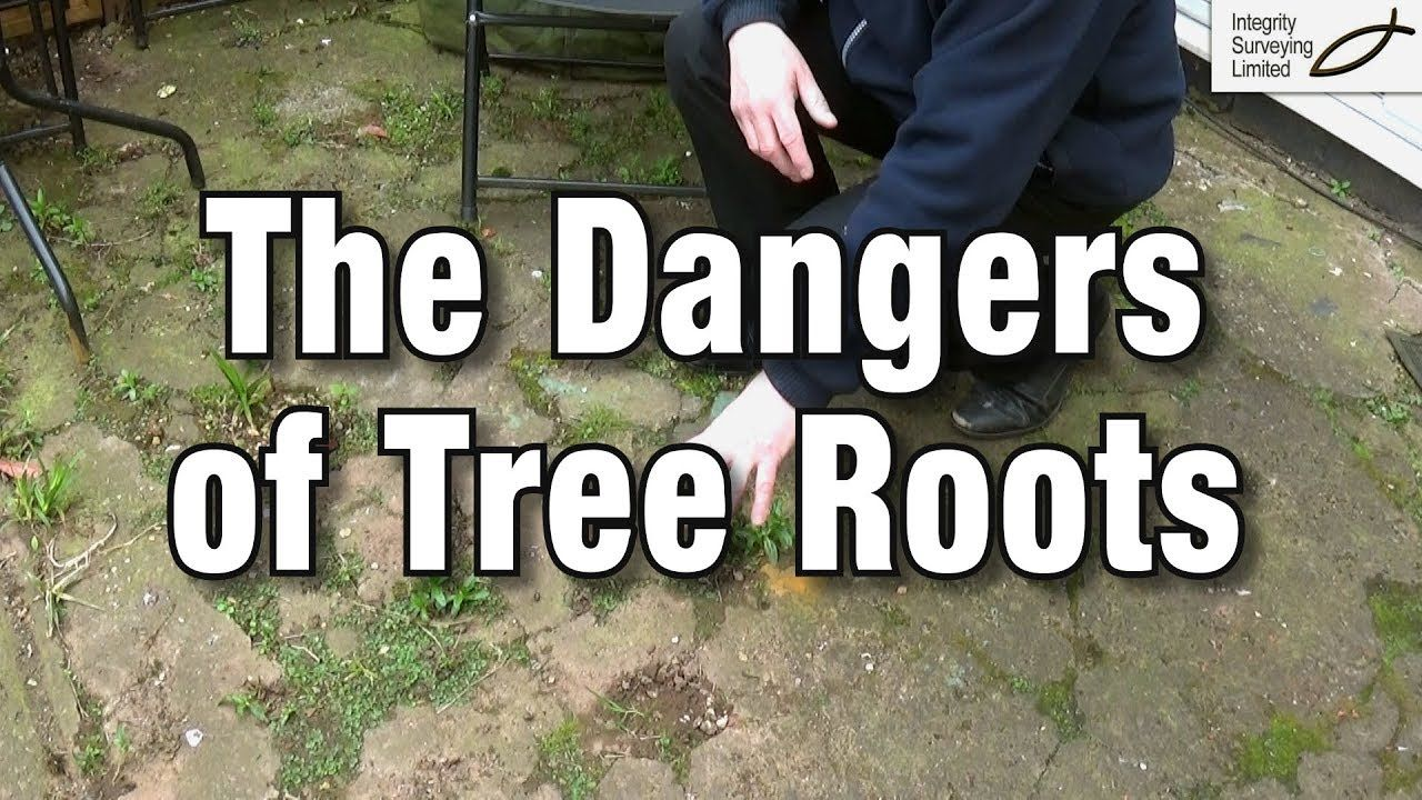 The Dangers of Tree Roots What can you do if you suspect