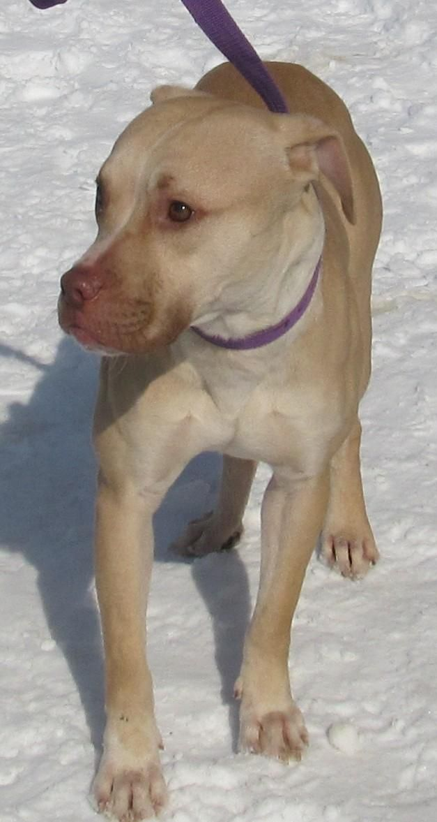 Adopt 20 Dudley/Transferred to HS on Nanny dog, Pet