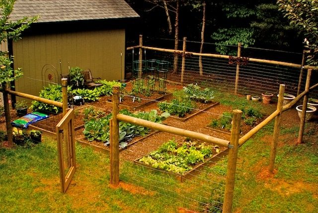 vegetable gardensnever thought about putting a wire wood fence around my raised garden beds to keep kids pets out create separation on side yard