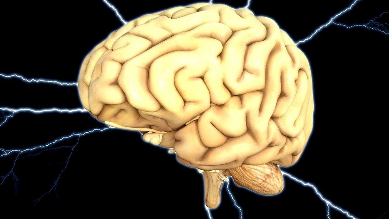 كهرباء المخ وأعراضها Human Brain Mango Health Benefits Mango Benefits