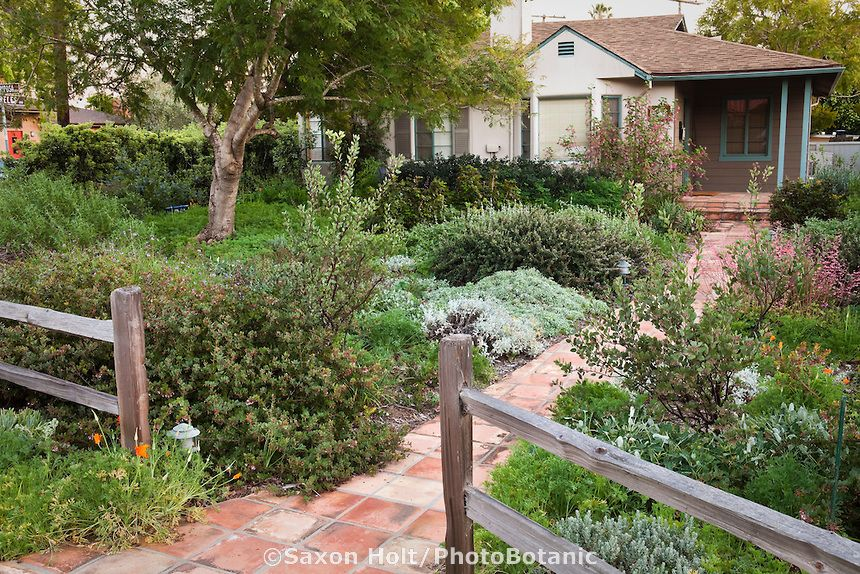 California bungalow drought resistant garden entering for Front yard plant ideas