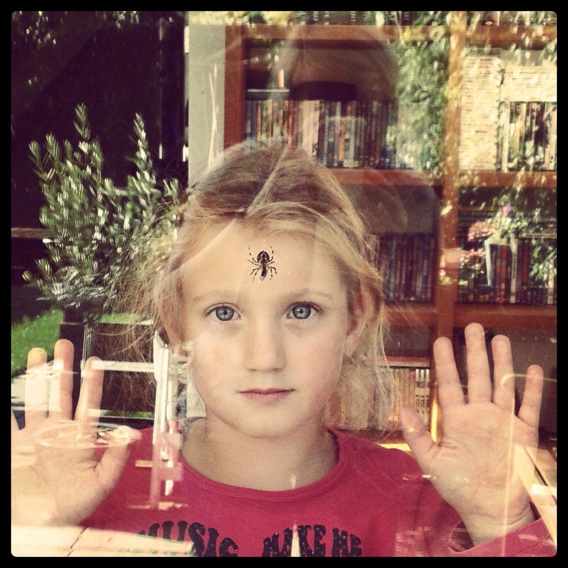 In dit geval 'veilig achter het glas' een spin observeren die een vlieg in zijn web heeft gevangen en hem gaat verorberen