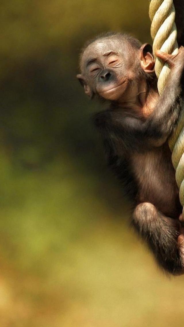 This must be the Dalai Lama of monkeys. Just look at his beatific ...