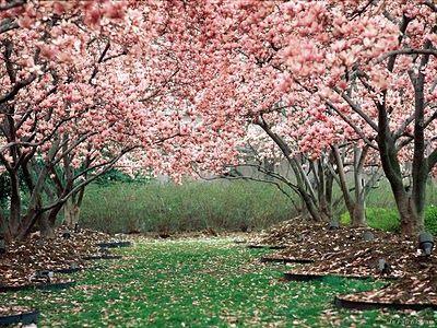 Yachounomori Garden Tatebayashi City Japan Beautiful Nature Beautiful Tree Blossom Trees