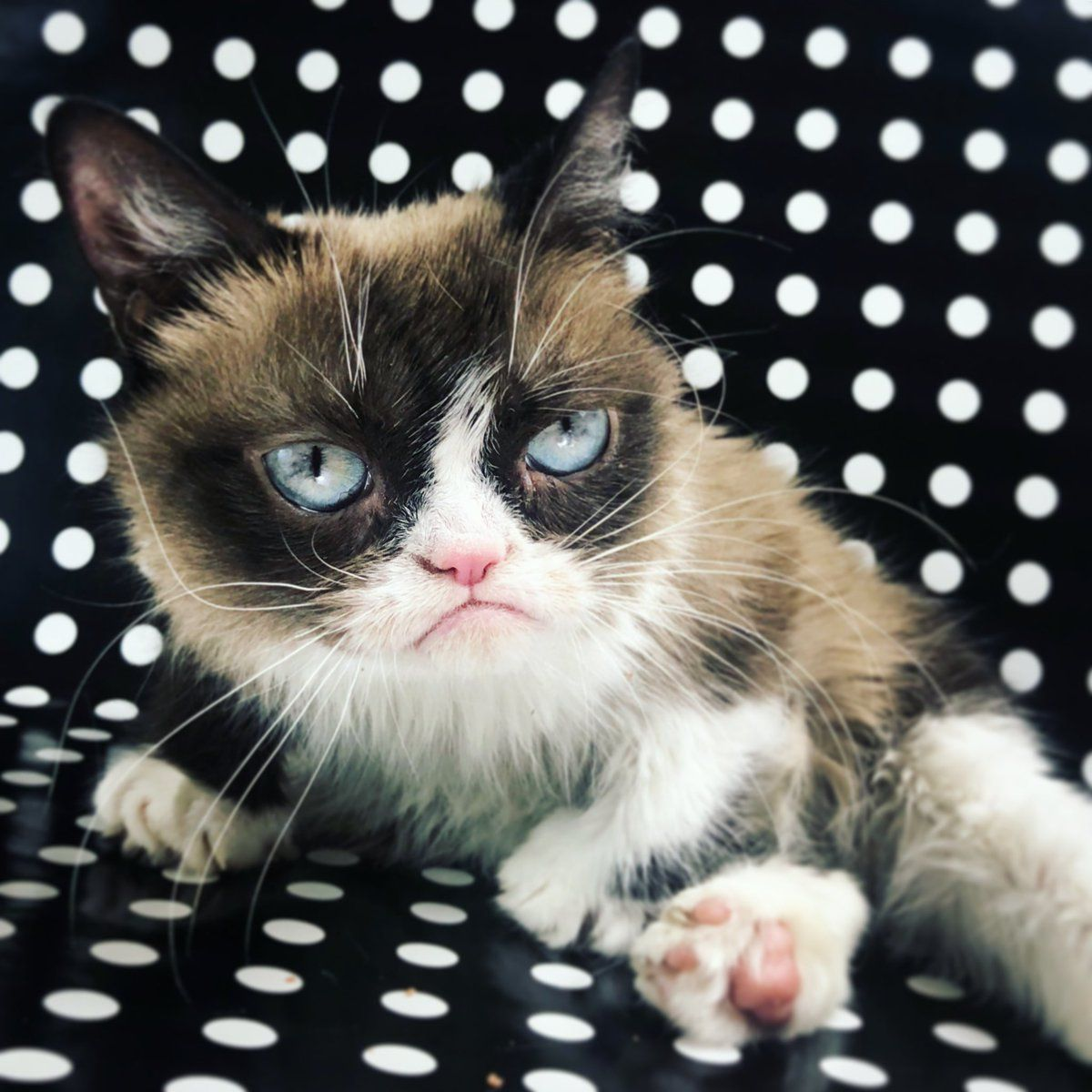 Pin by erp visions on grumpee cat Grumpy cat, Feline, Cats