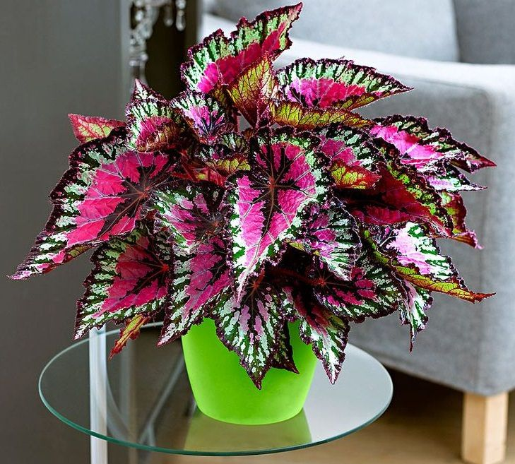 34 Poisonous Houseplants For Dogs And Cats Foliage Plants Flower Seeds Plants