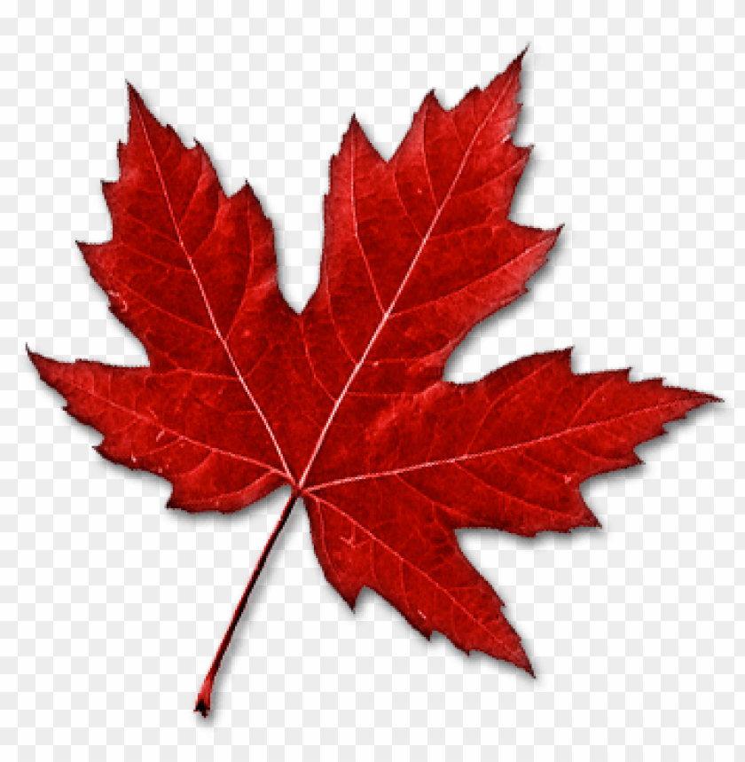 Download Canada Leaf Png Images Background Png Free Png Images Canada Leaf Free Png Downloads Png Images For Editing