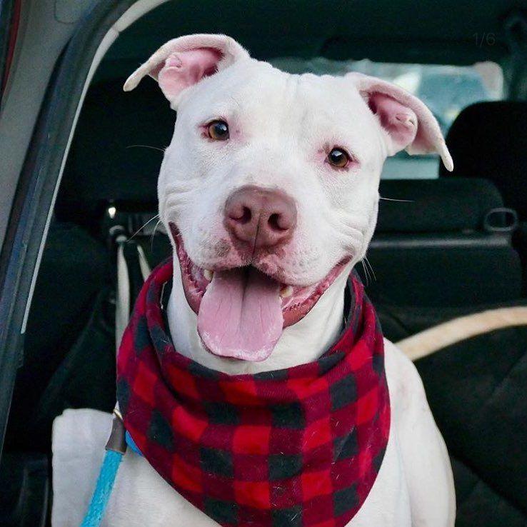 Adopt Tanner On Animal Rescue Center Animal Rescue Animals