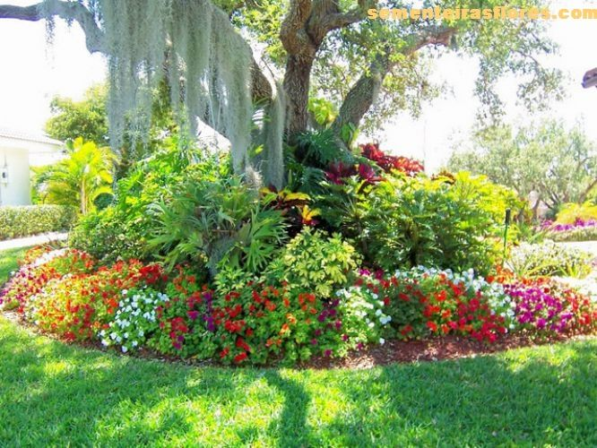 I should really plant lush bushy shrubs flowers and plants under – What Should I Plant in My Garden