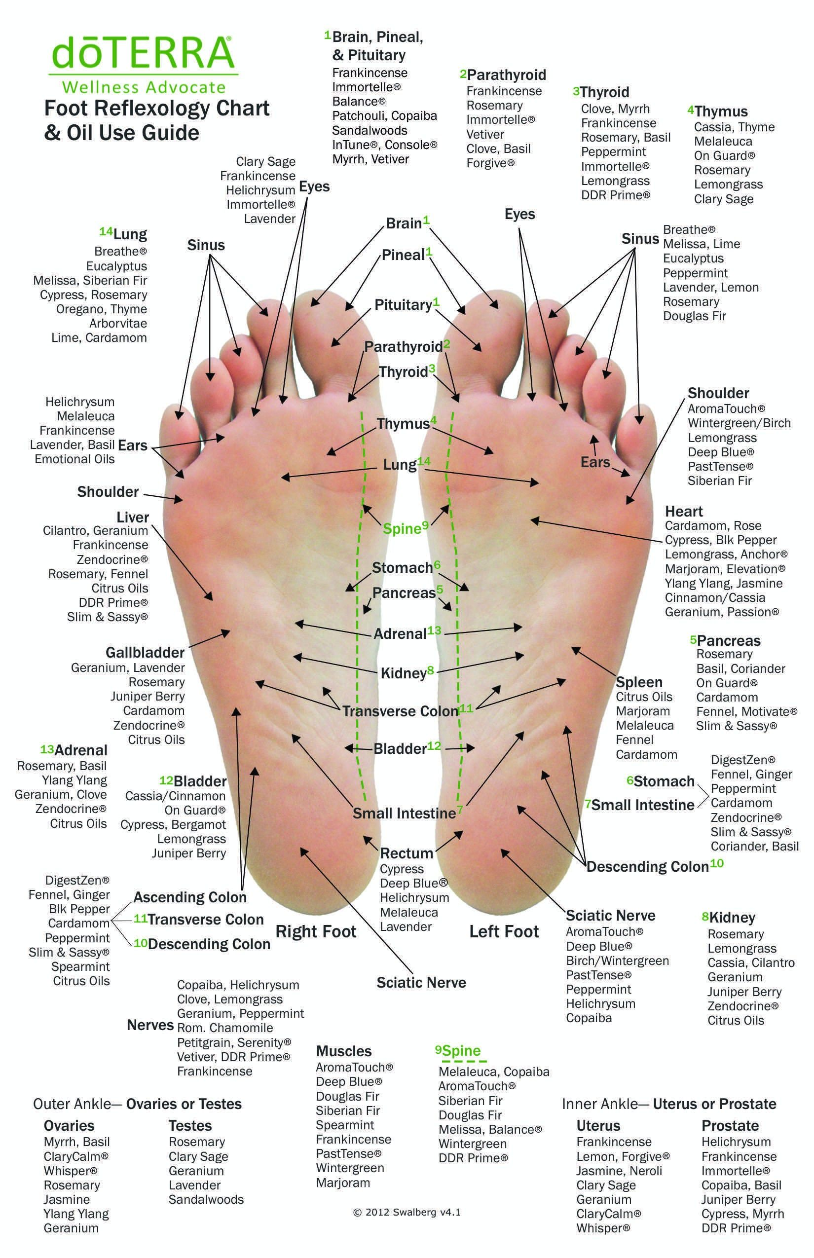 10 Pack - MINI Reflexology Chart & Essential Oil U