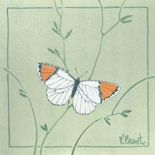 PB-Orange Tip Butterfly - Accent Tile