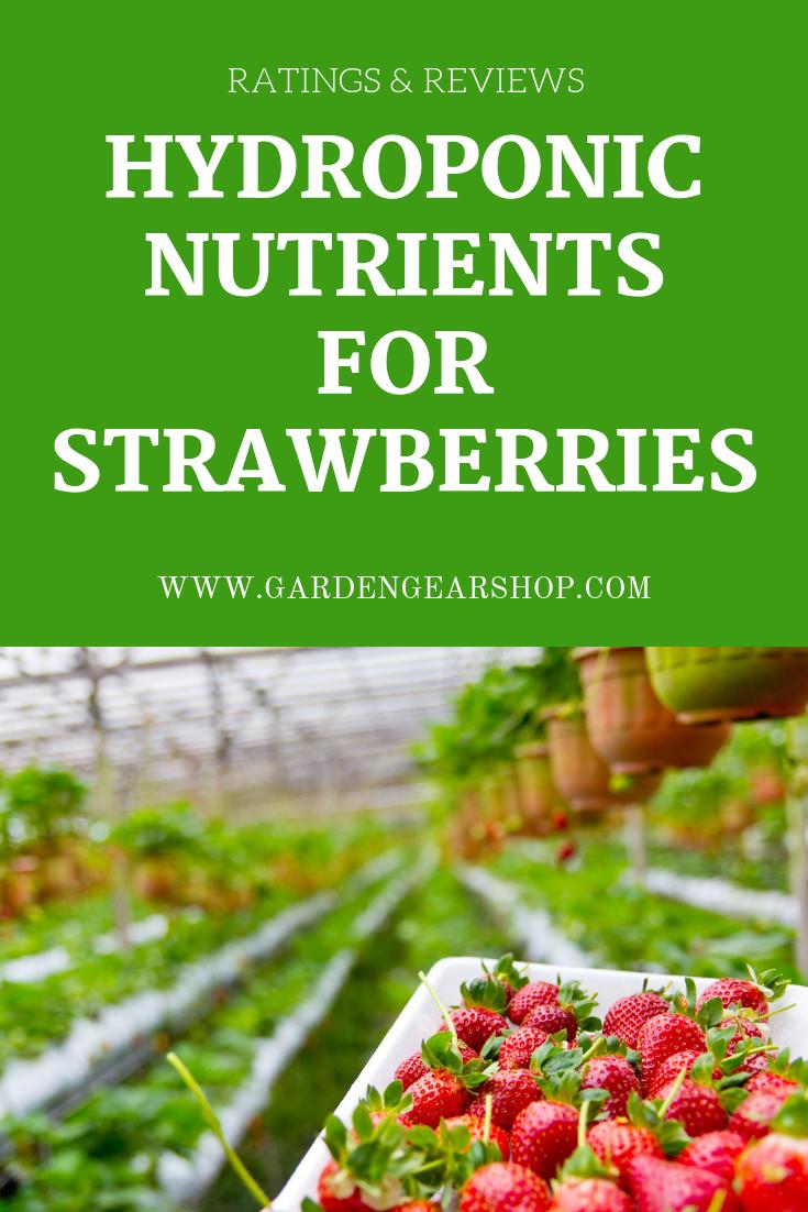 Hydroponic Strawberry Nutrients Hydroponic Strawberries Hydroponics Strawberry Varieties