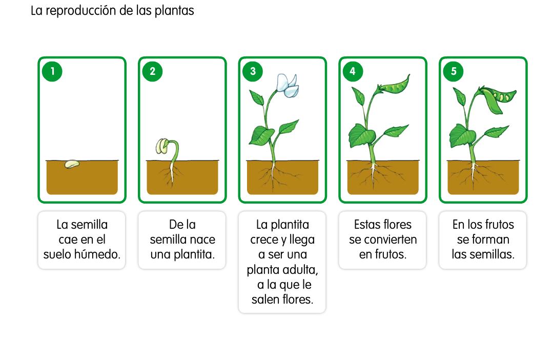 LA MINA .... 3º de PRIMARIA: LA REPRODUCCIÓN DE LAS PLANTAS