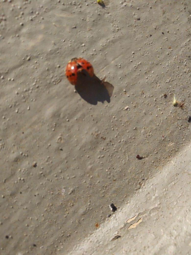 Lady Bug Credit card outside Hotel Door Room 341 Red Roof