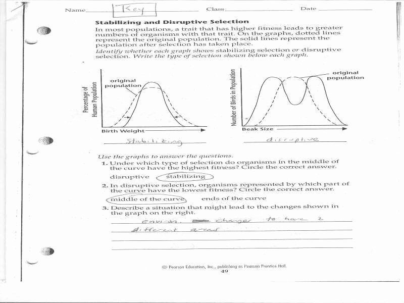 Evidence Of Evolution Worksheet Answers Pearson Education ...