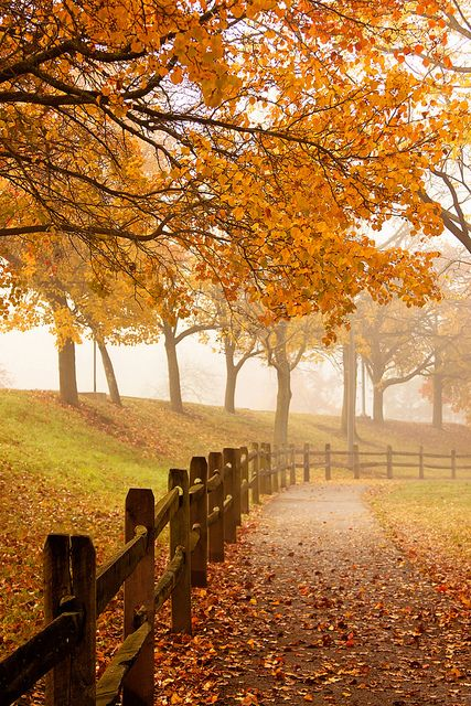 Bring on the leaf-peepers! Fall in Schenley Park by Melissa @ PPC, via Flickr