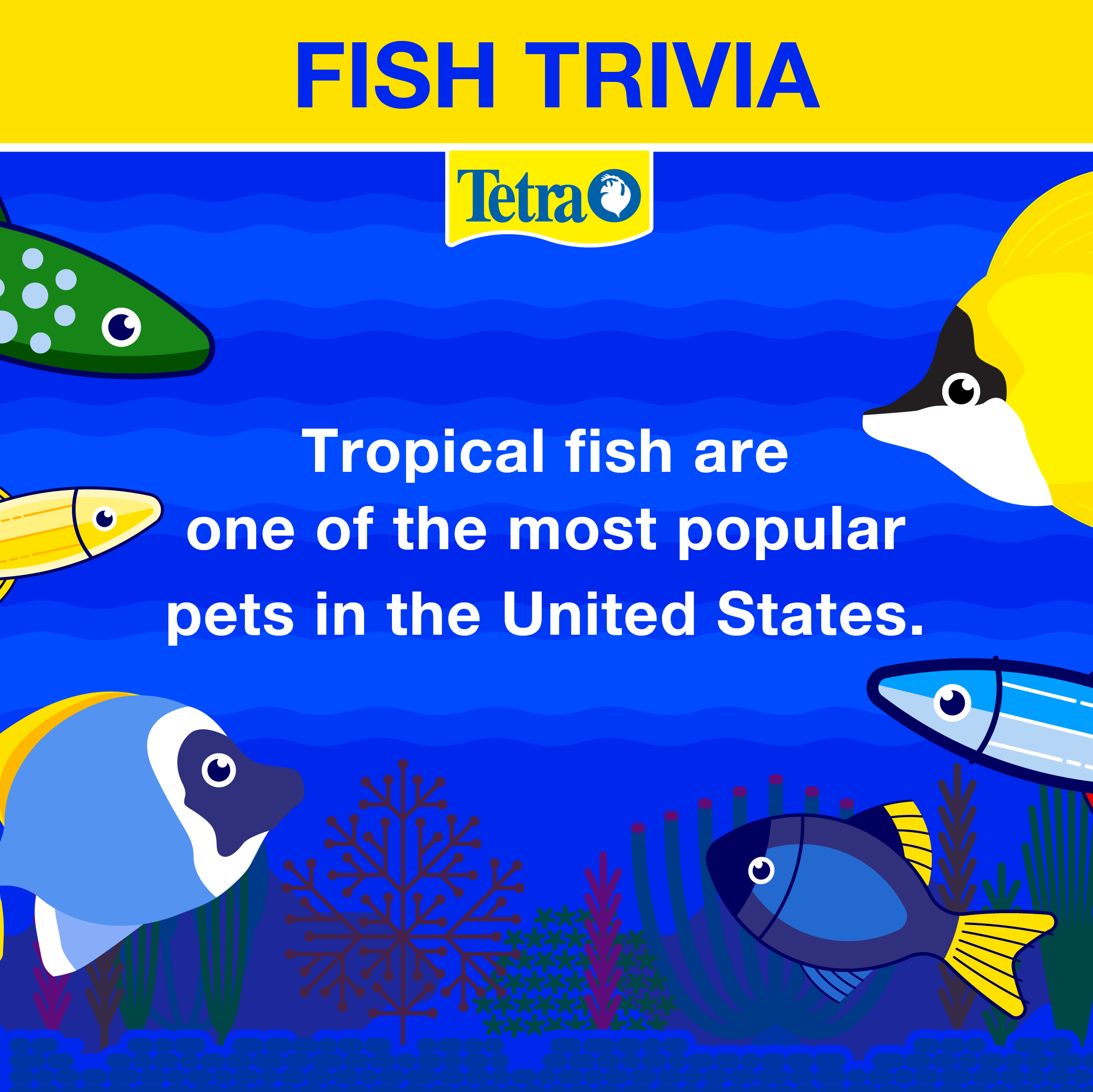 Fish Trivia Tropical Fish Are One Of The Most Popular Pets In The U S Tetrafunfact Fishrock Tropical Fish Tetra Fish Fun Facts