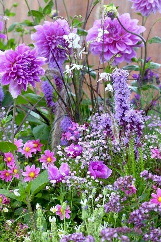 Dahlias Gauras Windflowers Baby S Breaths Lavender Https Www 99roots Com En Plant Sets Dahlias Windflowers Purple Garden Flower Garden Pretty Flowers