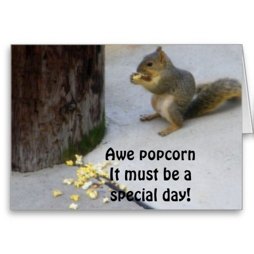 POPCORN EATING SQUIRREL BIRTHDAY GREETING CARD FUN TO SEND AND FUN TO RECEIVE I AM SURE :)